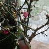 梅の花が咲きました(^-^)