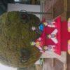 巨大苔玉とお雛様